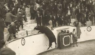 Toro saltando a la grada de la plaza de toros de Ontur
